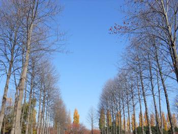 14_1129_yurinoki.jpg