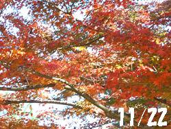 14_1130_i_kaede1.jpg