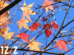14_1216_iroha_k1.jpg