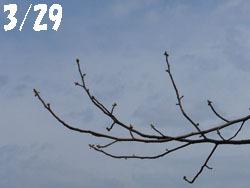 150415_yurinoki01.jpg