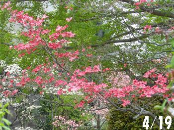 150525_hanamizuki03.jpg