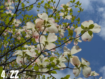 150525_hanamizuki08.jpg