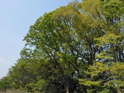 150531_zokibayasi1.jpg