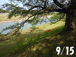 151119_higanbana1.jpg