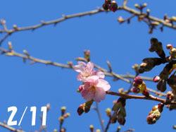 160218_kawadu_z1.jpg