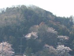 160424_oyama.jpg