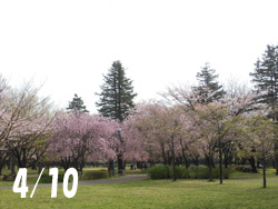 160507_park.jpg