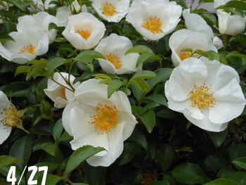 160527_naniwa_i1.jpg