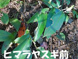 161031_yamajino_h2.jpg