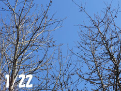 170206_momijiba_f1.jpg