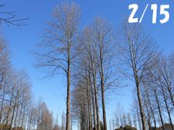 170220_yurinoki.jpg