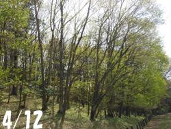 170506_zokibayasi1.jpg