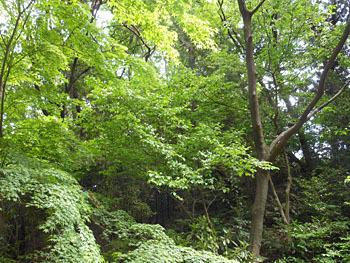 170619_sawafutagi1.jpg