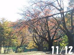 171201_sakura.jpg
