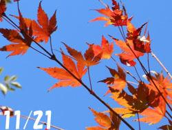 171220_iroha_k1.jpg
