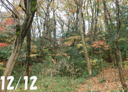 180111_zokibayasi1.jpg