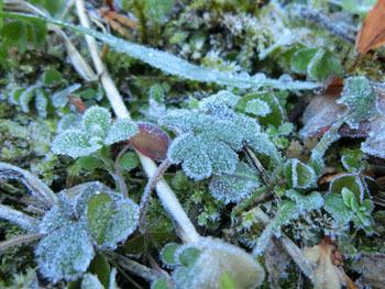 180116_frost4.jpg