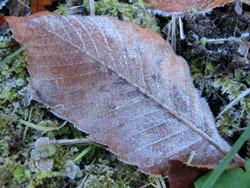 180117_frost2.jpg