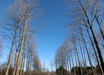 180121_yurinoki4.jpg