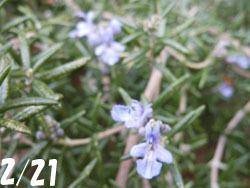 180311_herb.jpg