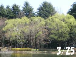 180502_s_yanagi.jpg