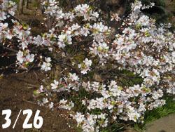 180507_yusura_u1.jpg