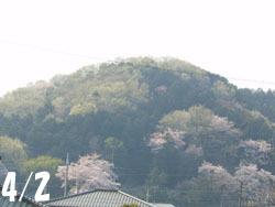 180521_sakura1.jpg