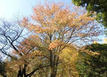 181221_mizuki1.jpg
