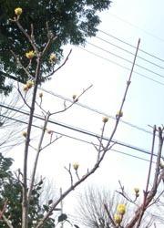 190331_sanshuyu1.jpg