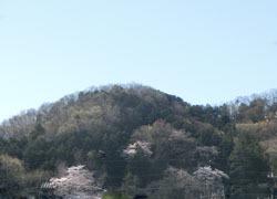 190523_sakura1.jpg