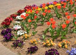 190604_tulip3.jpg