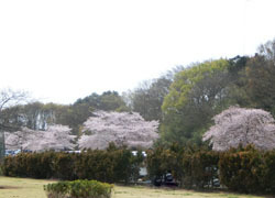 190609_kasen_jiki10.jpg
