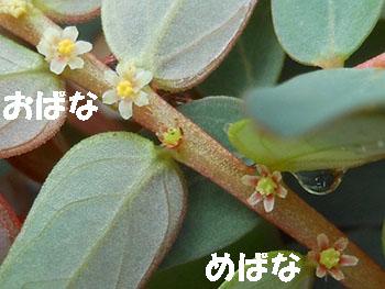 14_0831_k_mikanso5.jpg