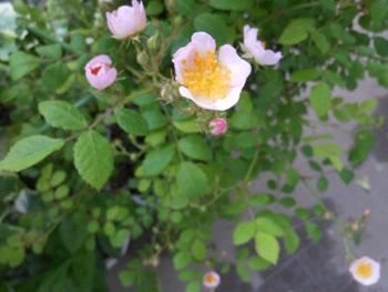 14_0920_noibara3.jpg