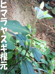 14_0925_yamajino_h2.jpg