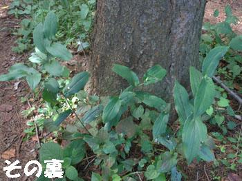 14_0925_yamajino_h4.jpg