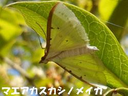 14_1001_maeaka_s_n.jpg