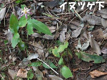 14_1007_yamajino_h5.jpg