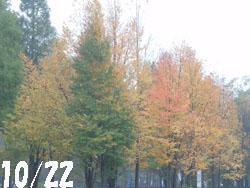 14_1030_katura1.jpg