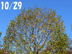 14_1104_kobusi.jpg