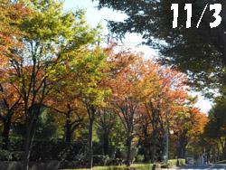 14_1107_keyaki1.jpg