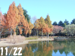 14_1201_park.jpg