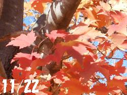 14_1202_a_hananoki1.jpg