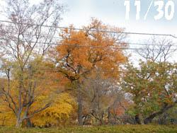 14_1210_park1.jpg