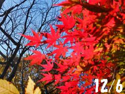 14_1218_iroha_k01.jpg
