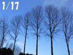 150117_poplar1.jpg