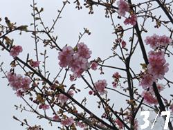 150308_kawadu_z1.jpg