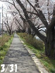 150420_sakura1.jpg