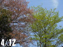 150505_saku_mizu.jpg
