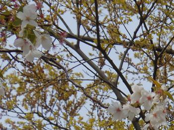 150509_saku_eno.jpg